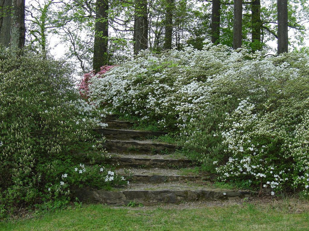 Azalea Garden - Garden Ideas ~ erikasmith.net