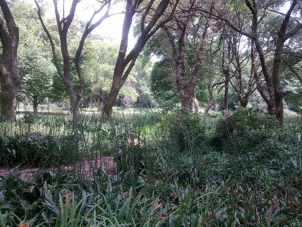 Brenthurst Garden, Johannesburg