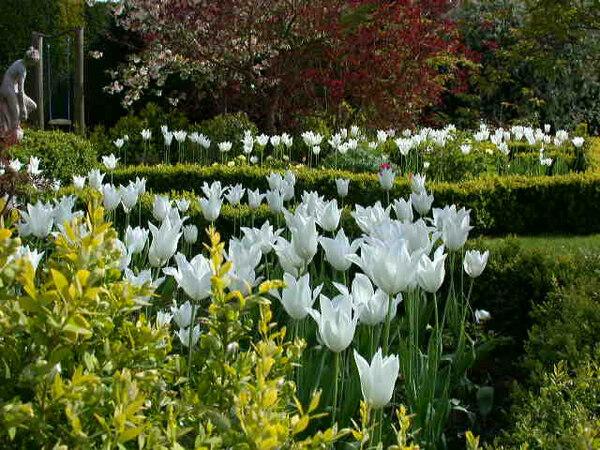 Parterre, Broadleigh Gardens