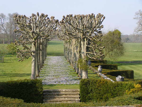 Chionodoxa forbesii, Mottisfont Abbey Garden