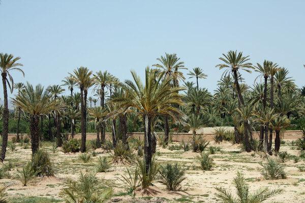 Palmeraie Garden, Morocco