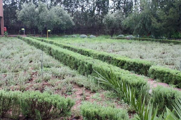 Jardin Bio-Aromatique D'Ourika, Morocco
