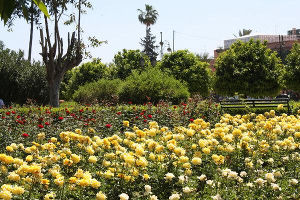 Koutoubia Gardens, Morocco