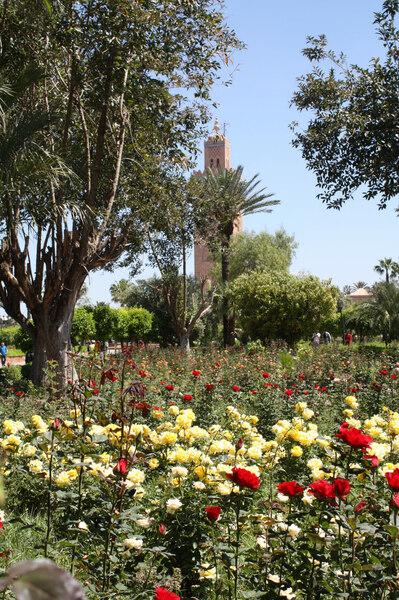 Roses, Koutoubia Gardens