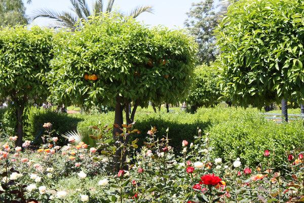 Koutoubia Gardens, Marrakech