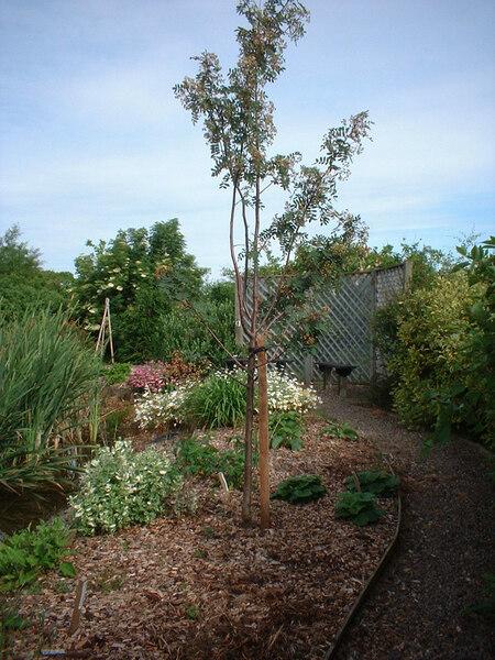 Longframlington Gardens, Morpeth