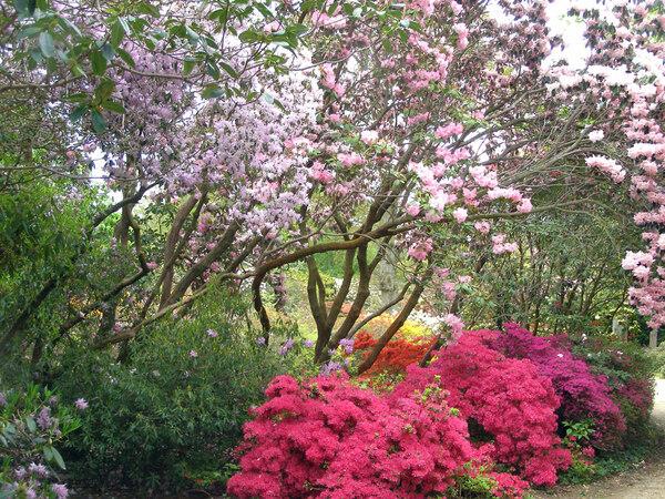 Exbury Gardens, Hants