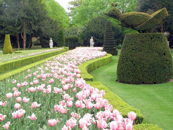 Tulips, Cliveden Garden