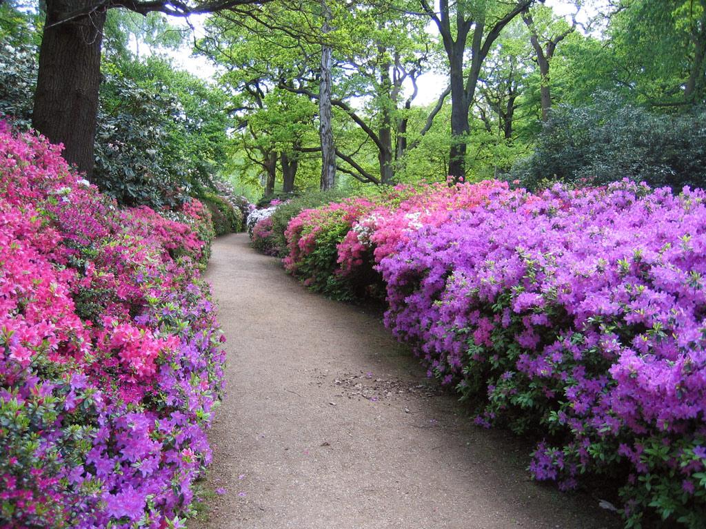 Isabella Plantation Garden
