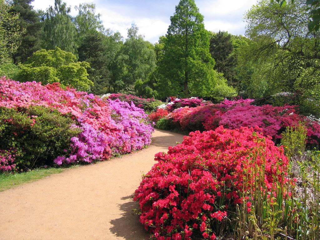 Isabella plantation garden for Landscape gardeners