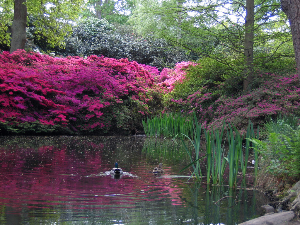 Isabella plantation garden for Landscape my garden