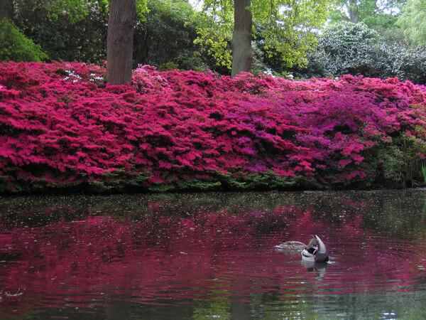 Pond, Isabella Plantation Garden