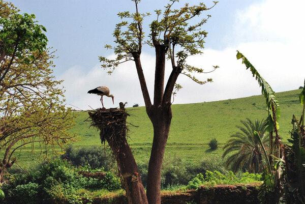 Chellah Garden, Rabat