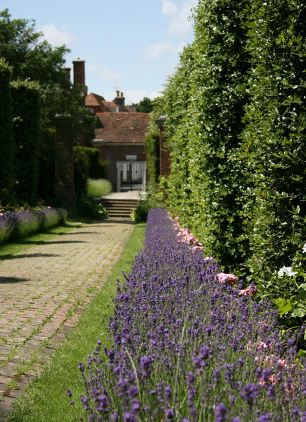 Holm Oak Walk, Salutation Garden