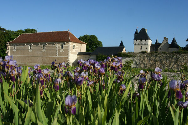 Iris Germanica, Chateau de Rivau