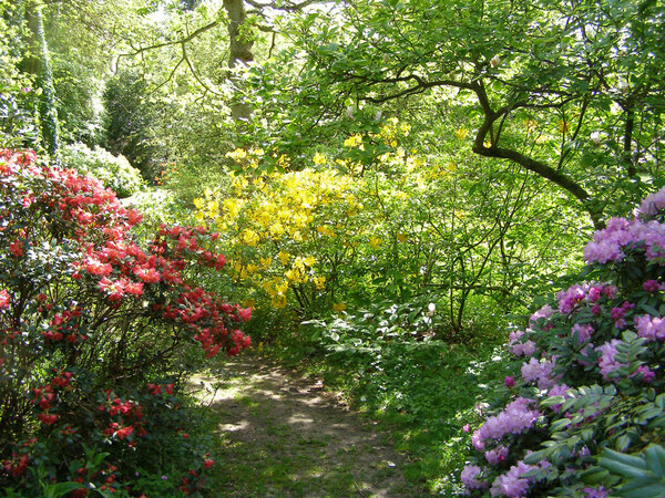 Evenley Wood Garden, Spring