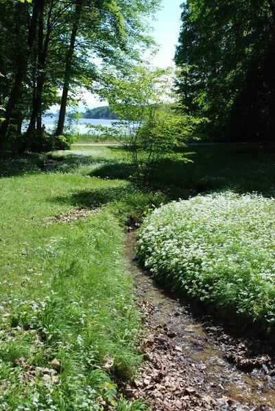 Stream, Feldafing Park