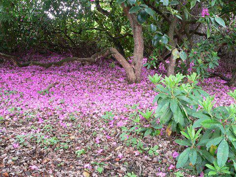 Ramster Garden, May 2009