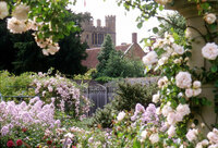 Medium coughton rose labyrinth original