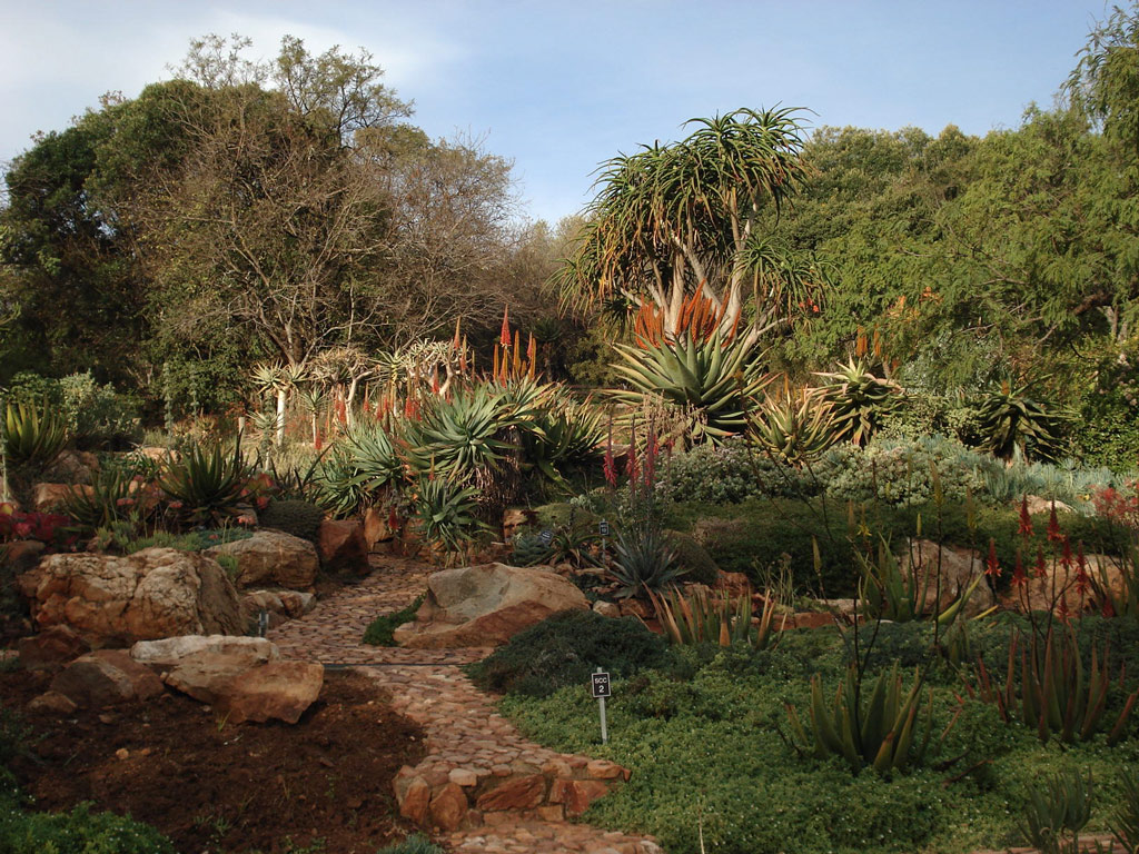 Aloes, Walter Sisulu National Botanic Garden
