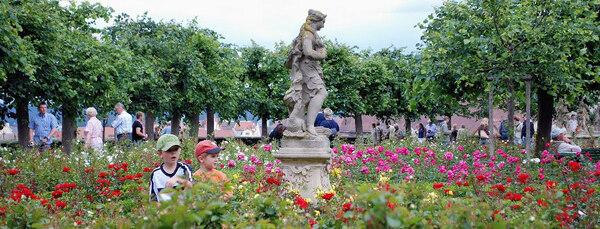 Roses, Bamberg