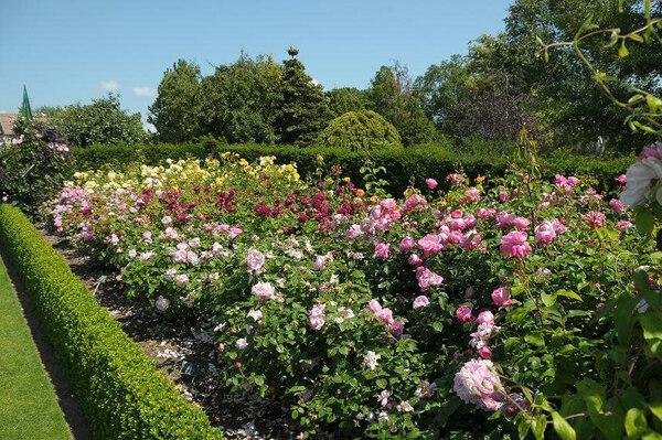 Roses, RHS Garden Hyde Hall