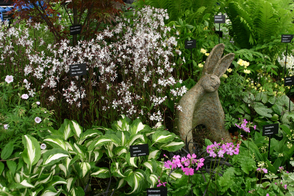 Harveys garden plants for Plants for outdoor garden