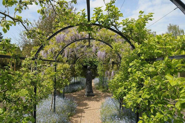 Wisteria, Michelham Priory Gardens