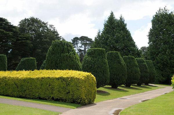 Dyffryn Botanic Garden, 2009