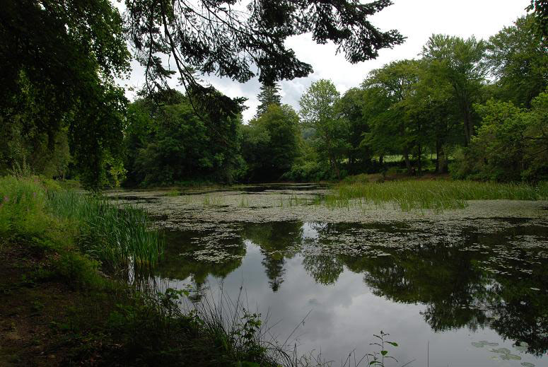 Lake, Llanerchaeron Estate