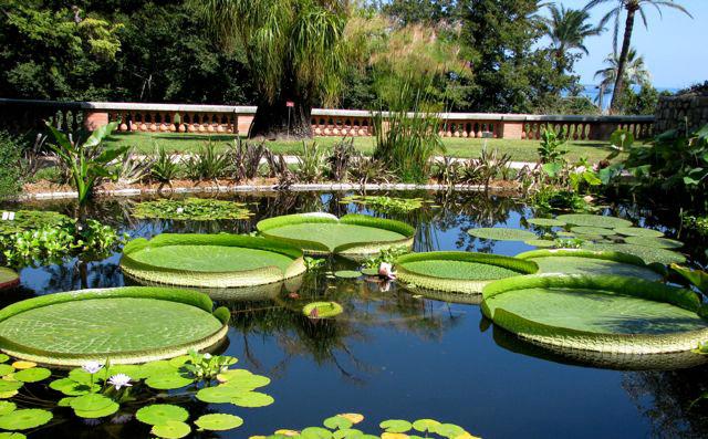 Jardin exotique val rahmeh for Jardin villa arson nice