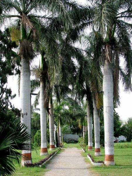Sahelion-Ki-Bari, India