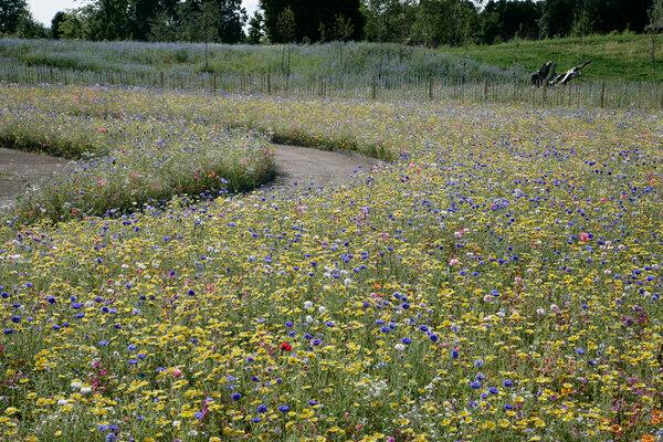 Wildflower Meadow, Butterfly World