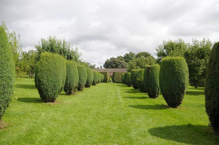 Hedges, Croft Castle Garden