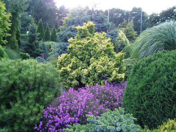 Conifers, Foxhollow Garden