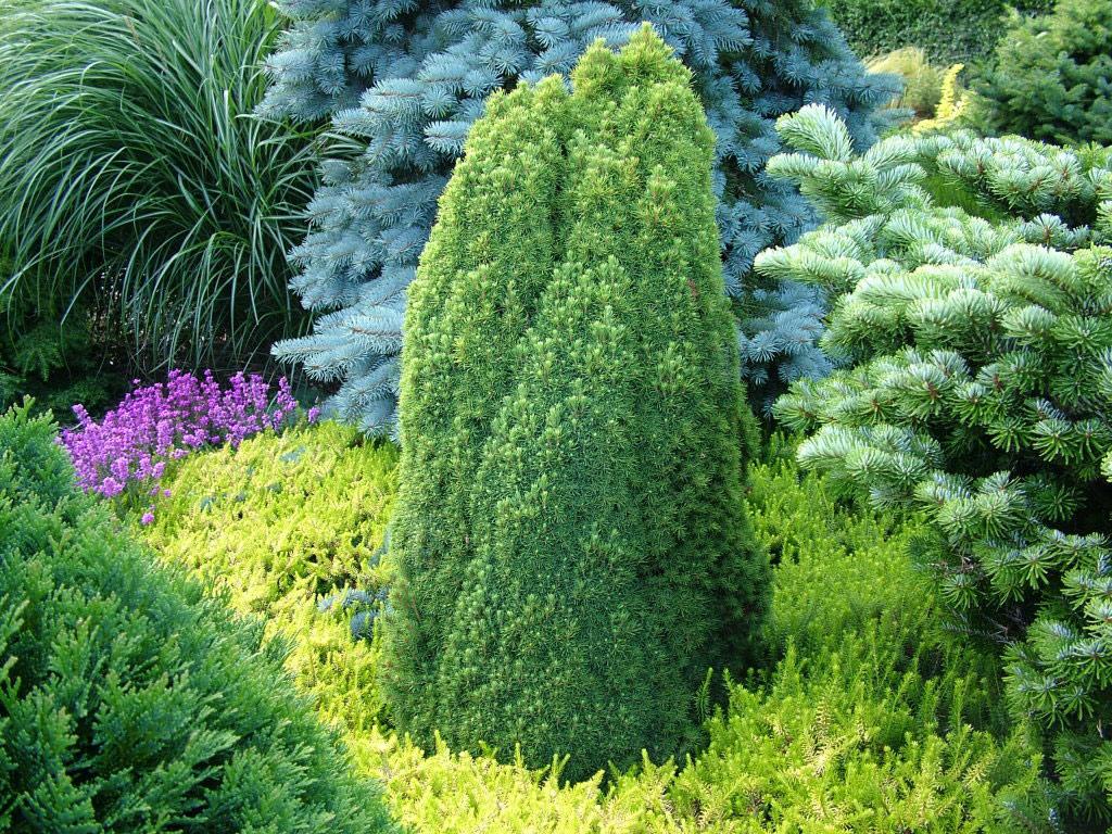 Foxhollow garden for Garden shrubs