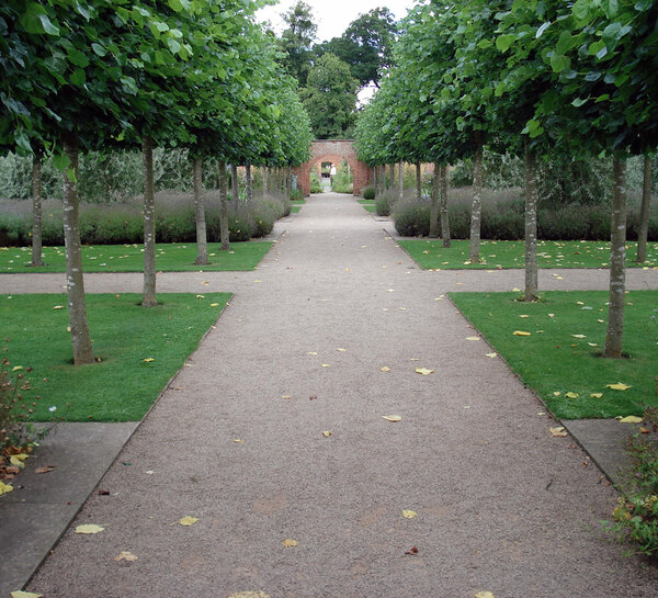 Avenue, Hampton Court