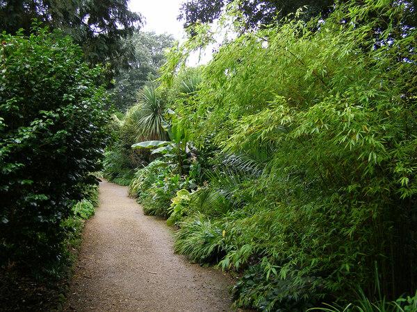 Woodland Path, Abbotsbury Gardens