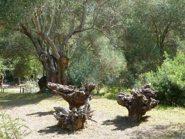 Cephalonia Botanica, Greece