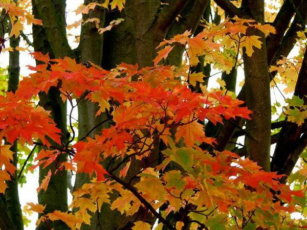 Kew Gardens, Autumn