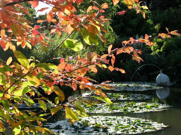 Sir Harold Hillier Gardens and Arboretum, Autumn