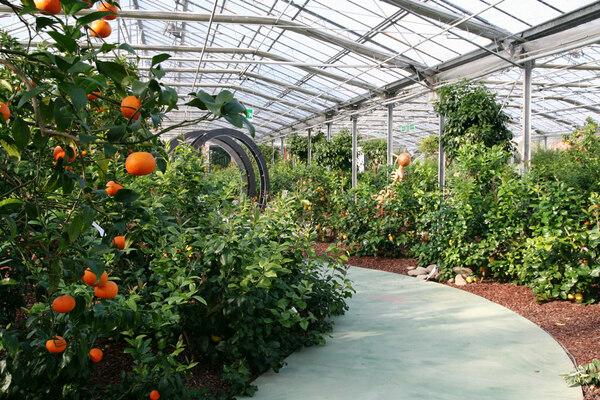 Citrus Garden, Tuscany