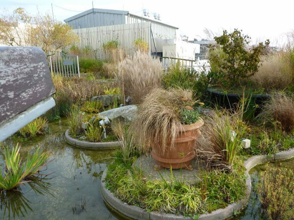 Jellicoe Roof Garden, Autumn