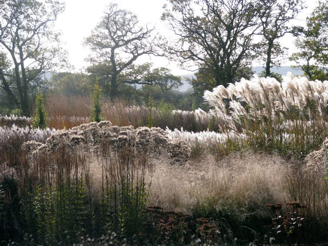 Sussex Prairie Garden, Autumn