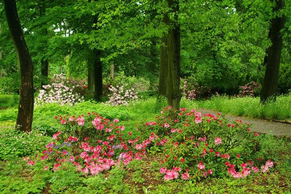 Dendrologická zahrada, Průhonice