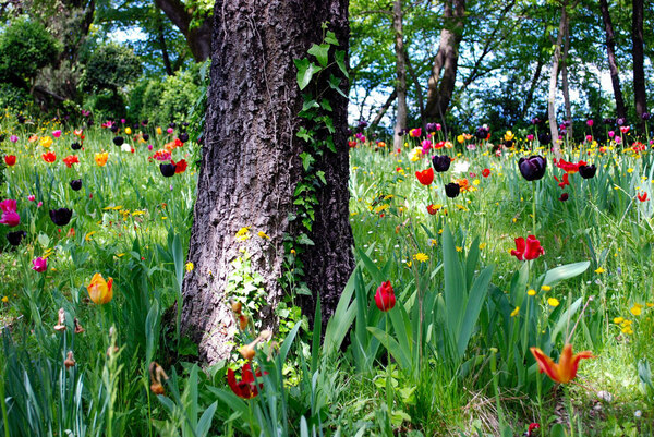 Tulips, Parco Giardino Sigurtà