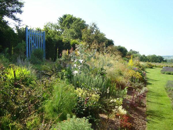 Dry Garden, Yorkshire Lavender