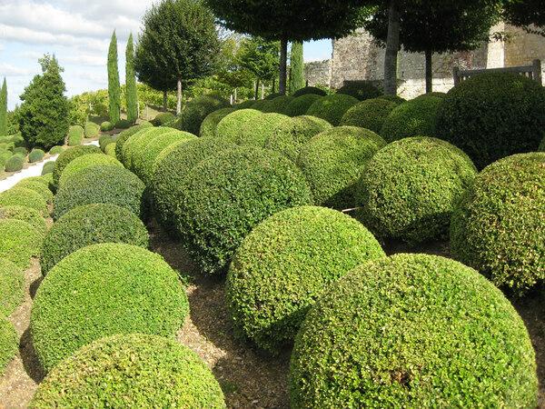 Amboise Garden
