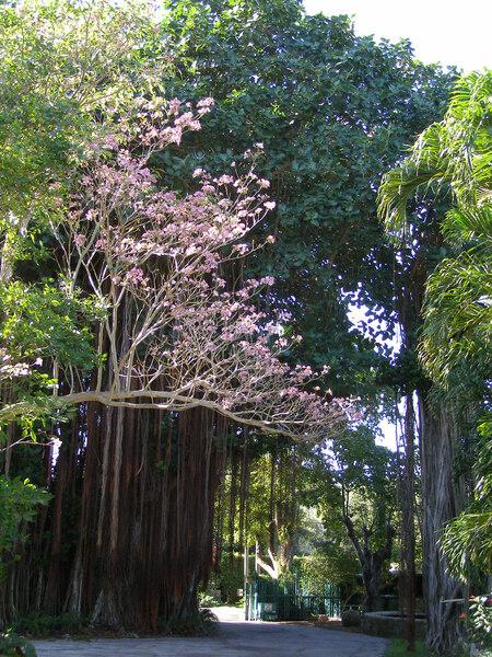The Kampong, Florida