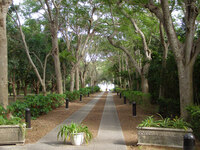 Medium deering estate florida original